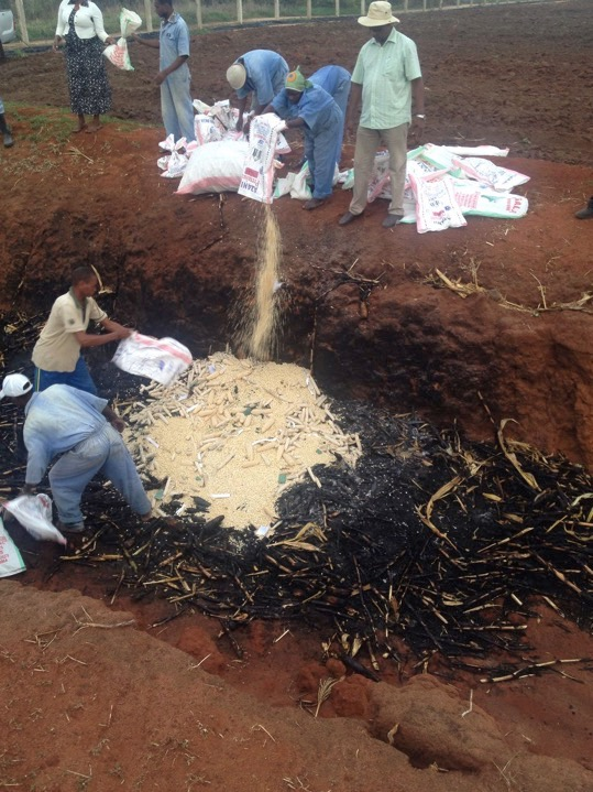 Researchers pour bags of GMO maize into the firepit